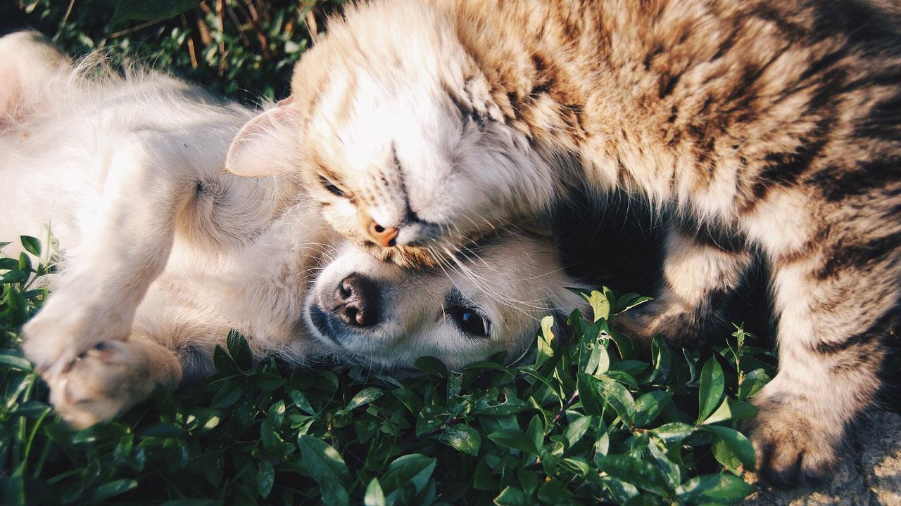 Eukanuba ondersteunt de vitaliteit van jouw hond